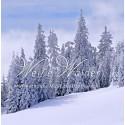 Weiße Wälder. Weihnachtliche Musik aus Oberfranken